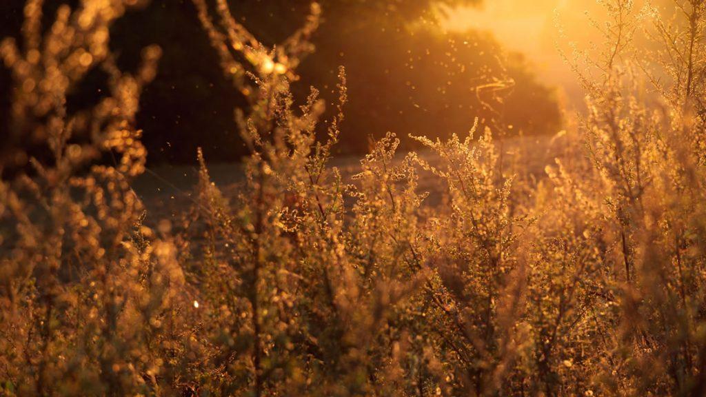 web_1127_sunny_fields
